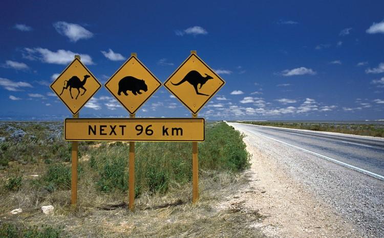 10 Aussie Creatures to prevent
