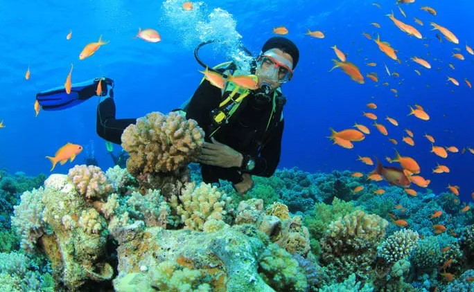 The very best Scuba diving Dive- Scuba diving within The islands